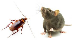 Mice, Roaches and Rats